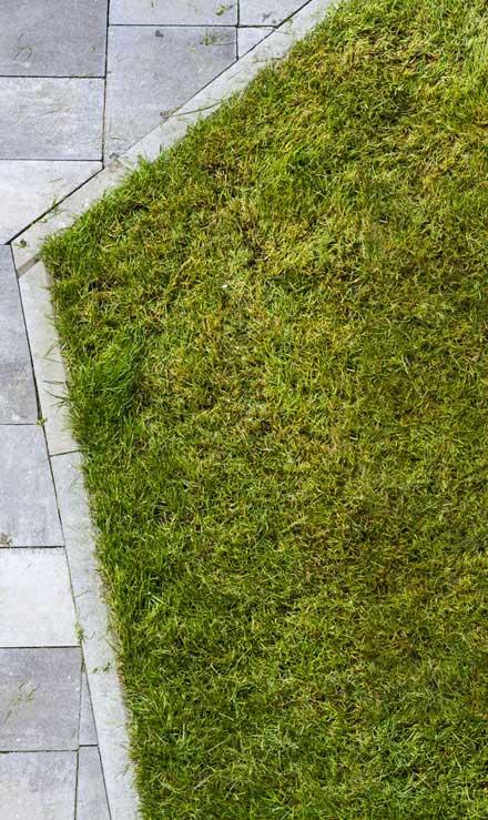 Losey's Lawn & Landscape, Inc. Lawn Dethatching