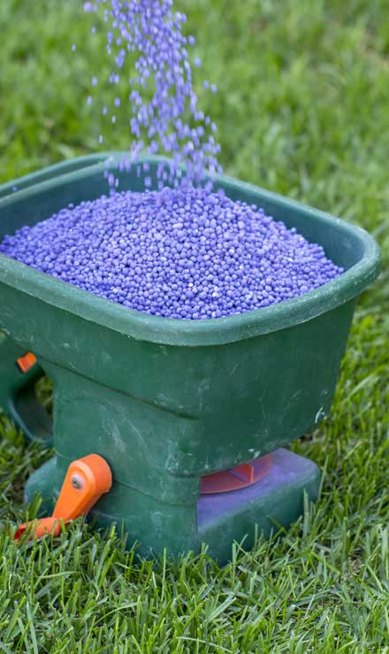 Losey's Lawn & Landscape, Inc.  Lawn Fertilization