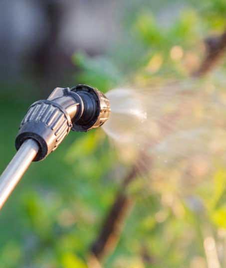 Losey's Lawn & Landscape, Inc. Lawn Pest Control