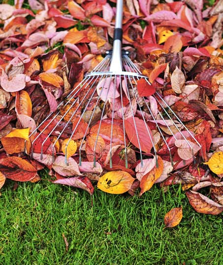 Losey's Lawn & Landscape, Inc. Fall Clean Up