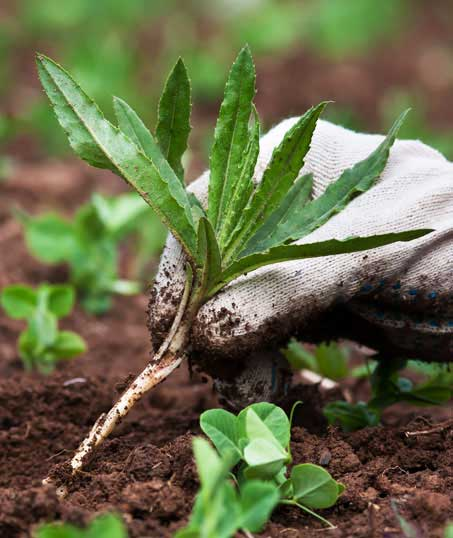 Losey's Lawn & Landscape, Inc. Weed Control services